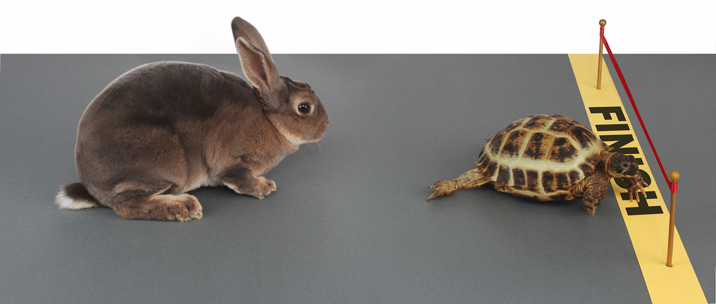 tortoise-and-rabbit